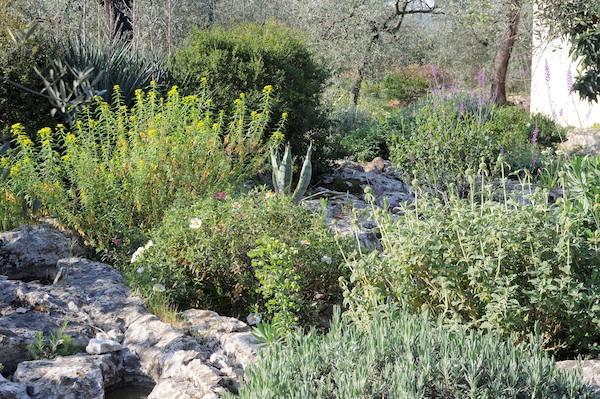 les jardins sont beaux en mai ! Cistus10