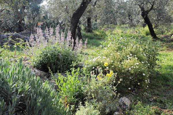 les jardins sont beaux en mai ! Cistus11