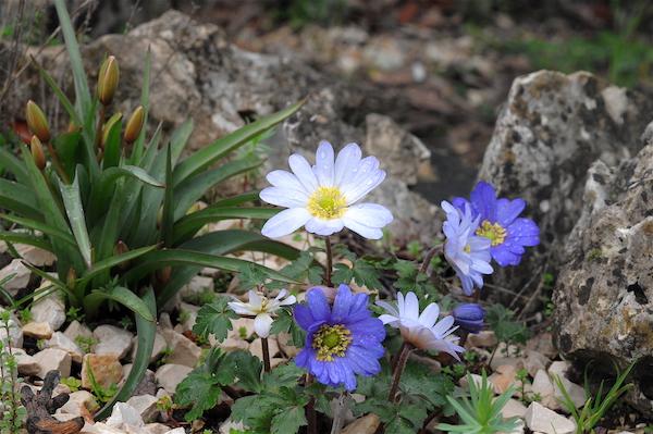 giboulées de fleurs ? Copia_54
