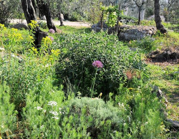 les jardins sont beaux en mai ! Massif10