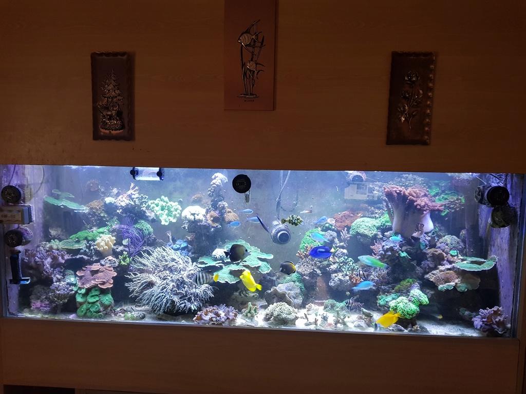 coraux durs Acropora 20180310