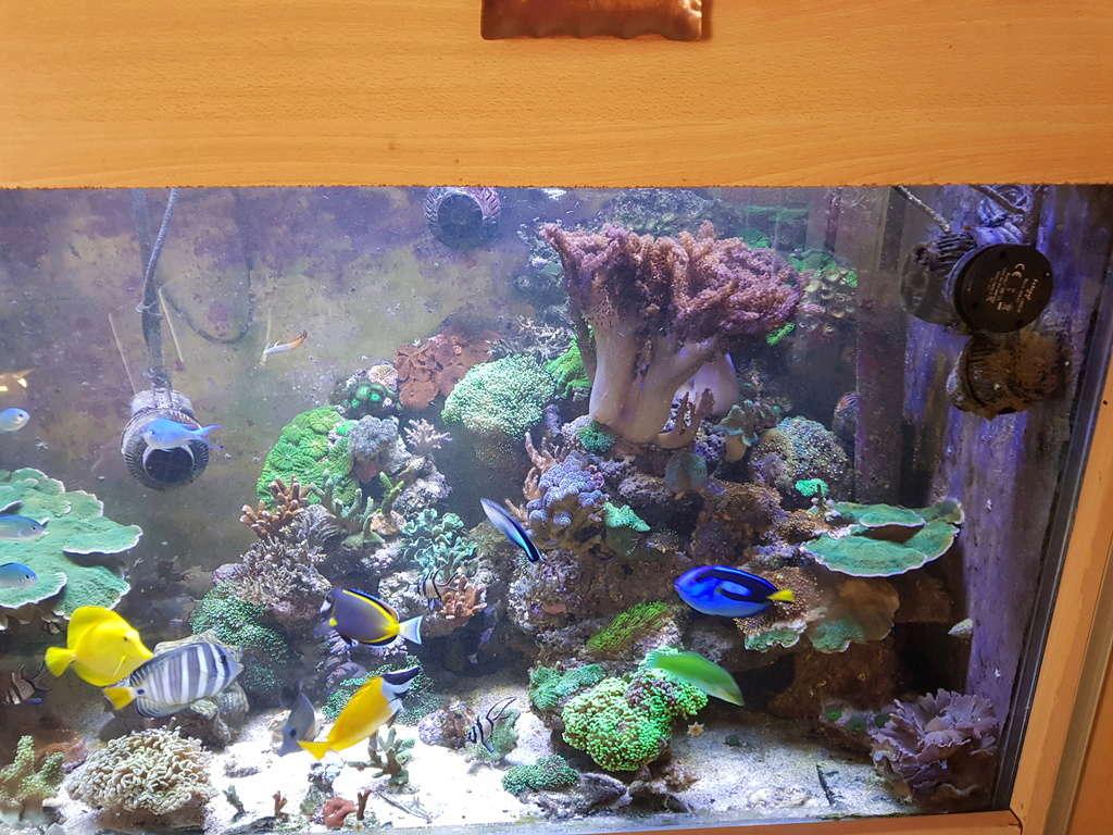 coraux durs Acropora 20180312