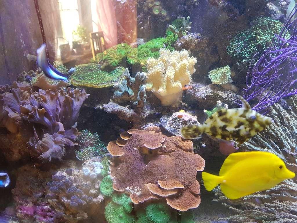 coraux durs Acropora 20180313