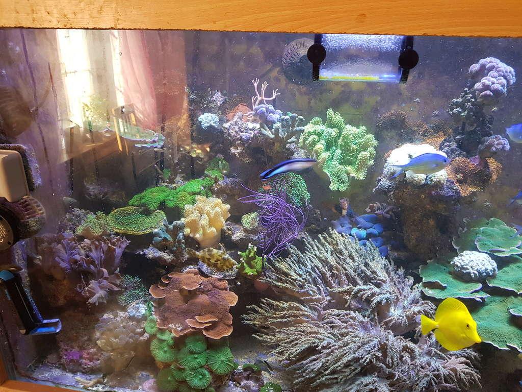 coraux durs Acropora 20180315