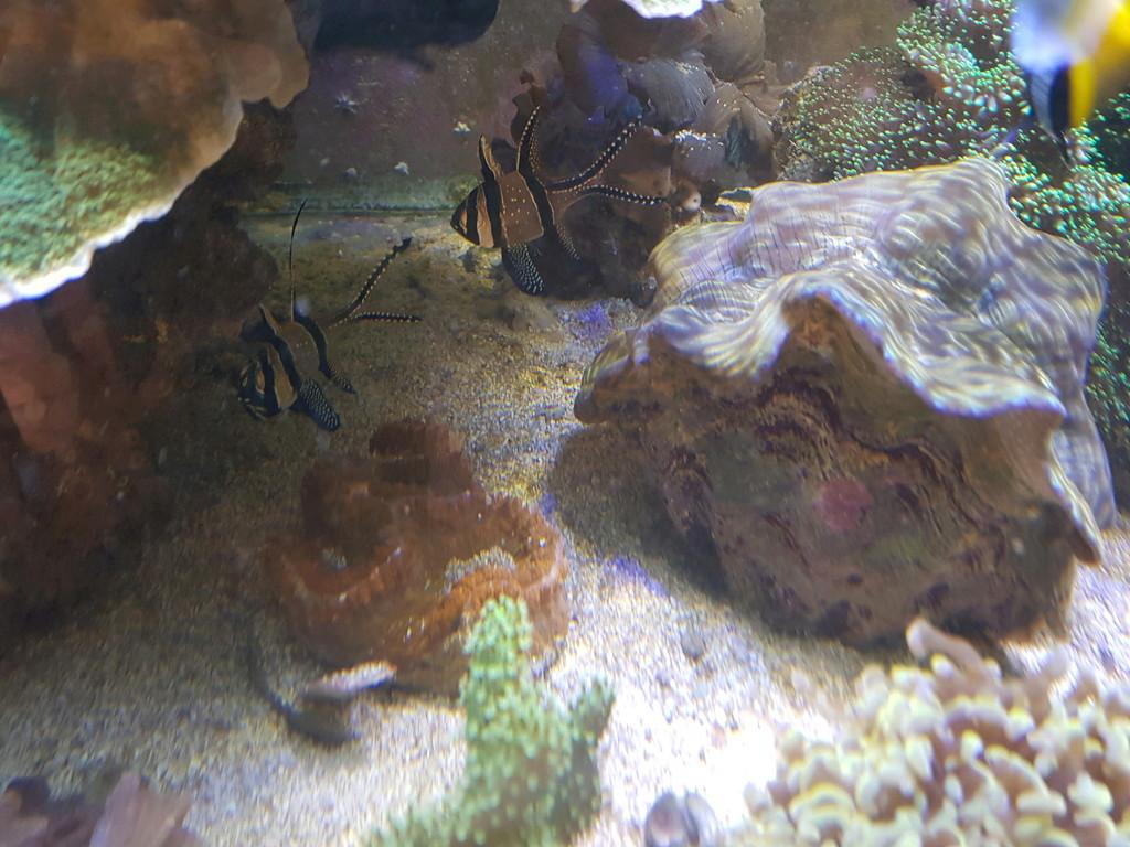 coraux durs Acropora 20180323