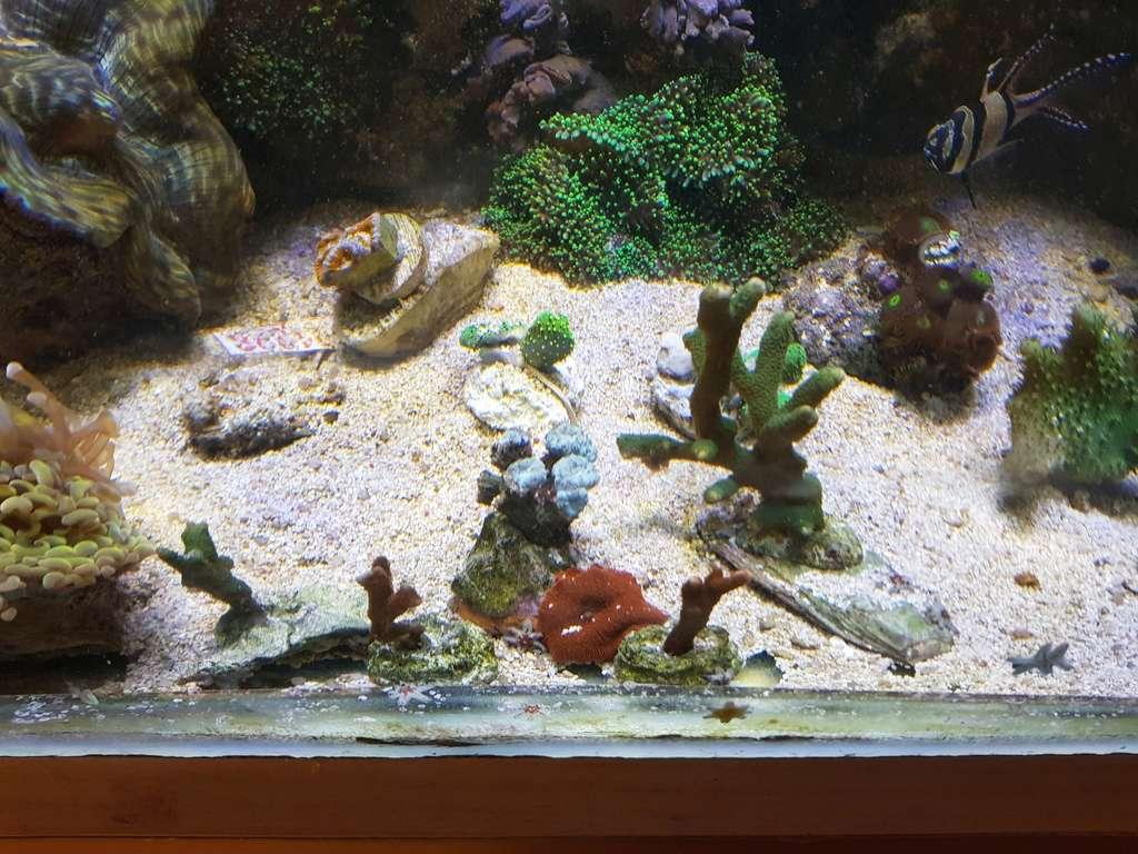coraux durs Acropora 20180325