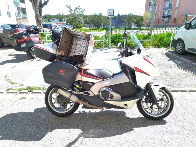 Faire de la moto avec un animal ?? Intygr10