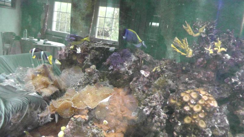 Aquarium 1500 litres S1890010