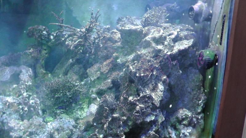 Aquarium 1500 litres S1890011