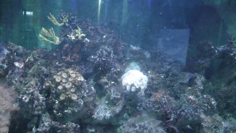Aquarium 1500 litres S1890012