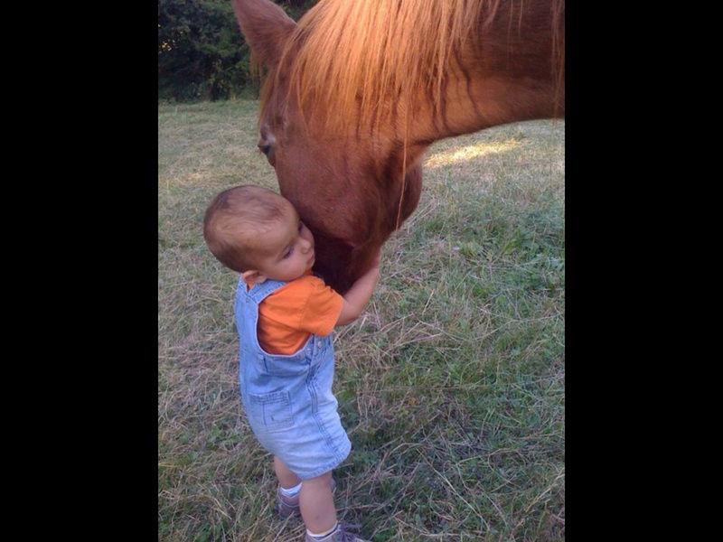 """ON VOTE Concours photos """"Nos chevaux et la tendresse"""" Image14"""