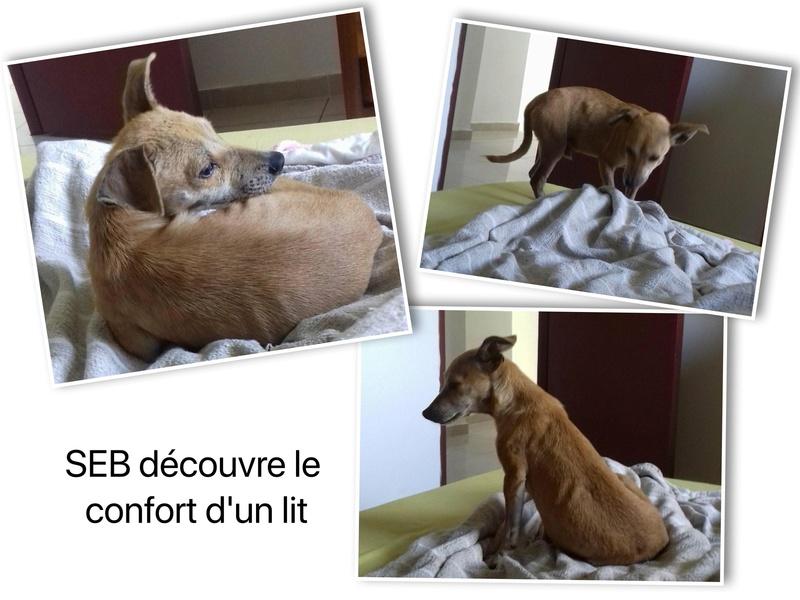 SEB né le 01/03/2017 - M - Adopté département 02 Seb_co12