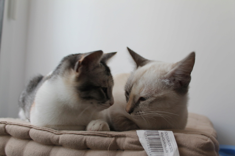 ELFIE (Oneida) et YUKI (Chenoa) Img_8514