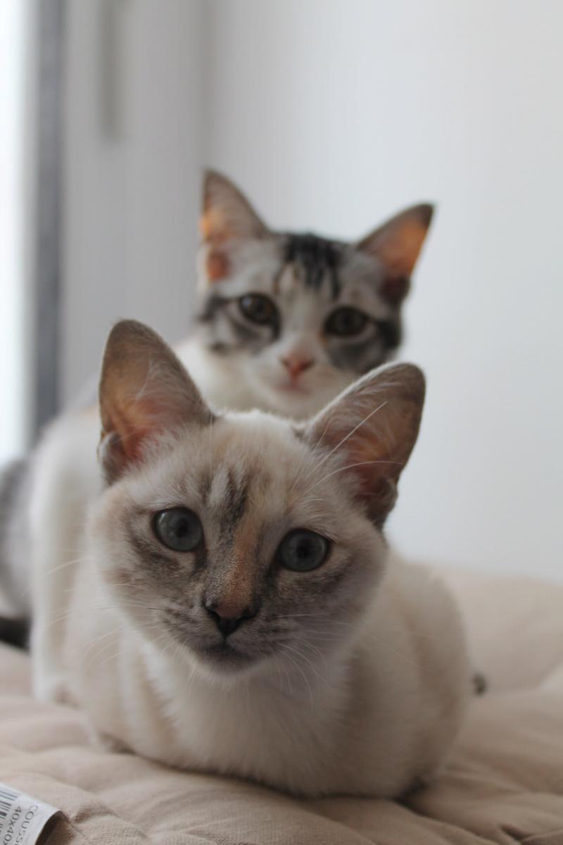 ELFIE (Oneida) et YUKI (Chenoa) Img_8515