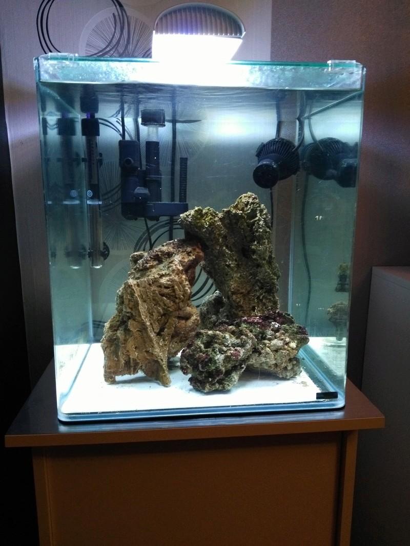 présntation de mon nano marinus dennerle 60L. Img_2012