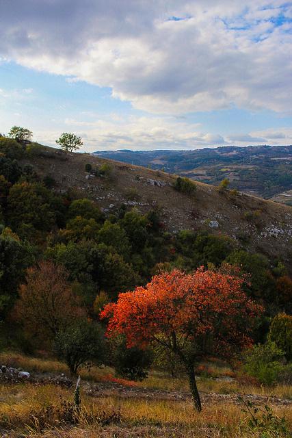L'arbre Flamboyant au milieux des collines. Arbre10