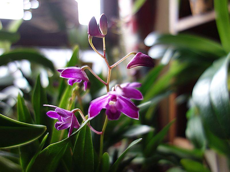 Orchideen 2 (fortlaufende Seiten 200 bis 300) - Seite 100 Dsc07831