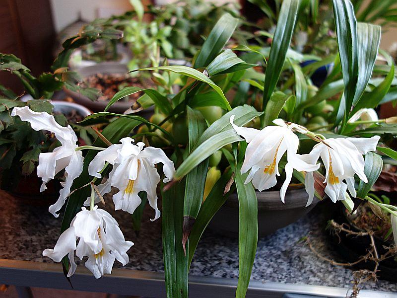 Orchideen 3 (fortlaufende Seiten 300 bis 400) - Seite 6 Dsc07923