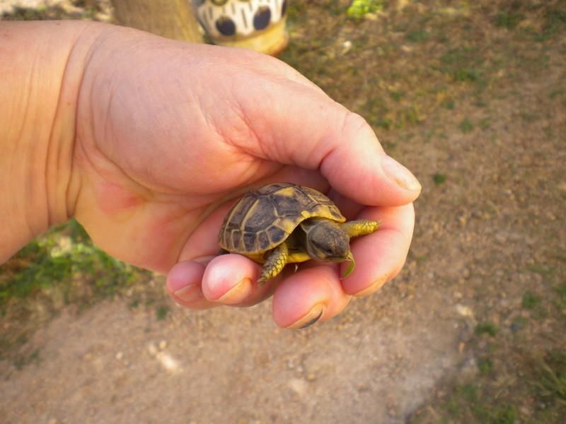 escargots géant chez hanaè et mini tortues ici !!!!   Dscn3712
