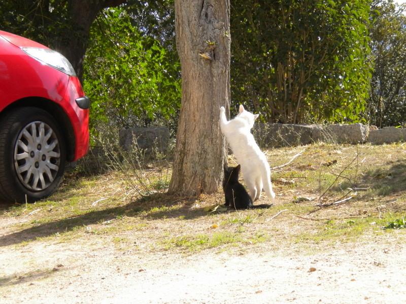 j'aime ! j'aime !!! j'aime les chats !!!!!! Dscn3713