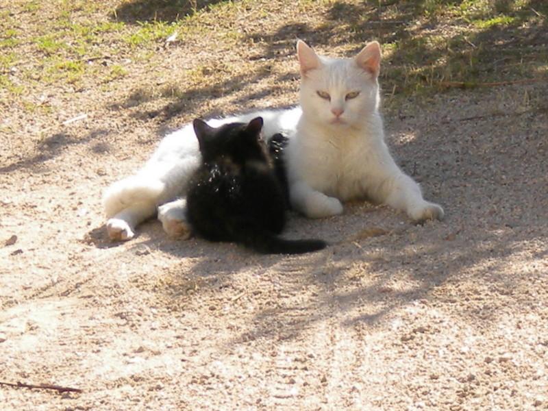 j'aime ! j'aime !!! j'aime les chats !!!!!! Dscn3715
