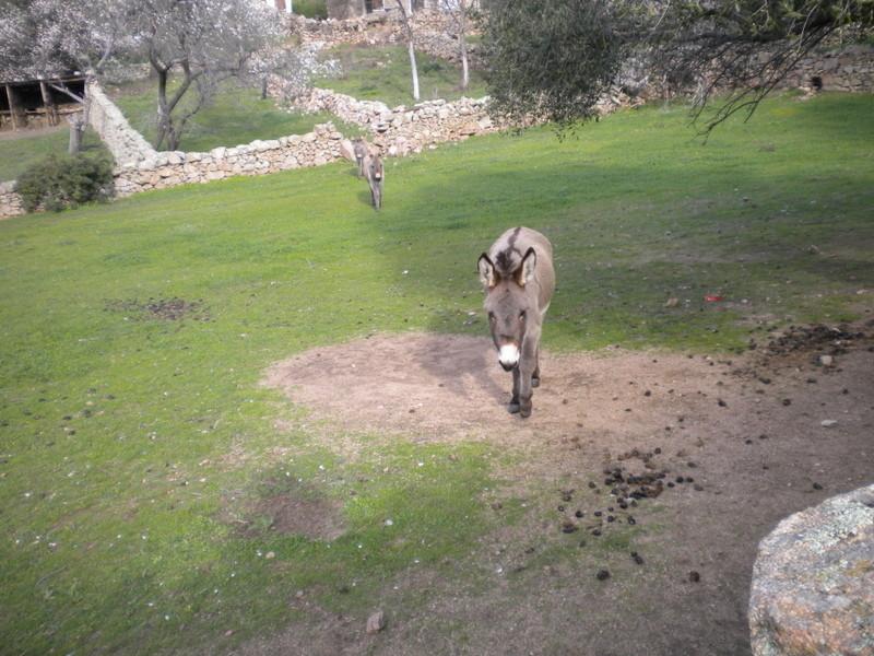 les ânes du village - Page 2 Dscn4021