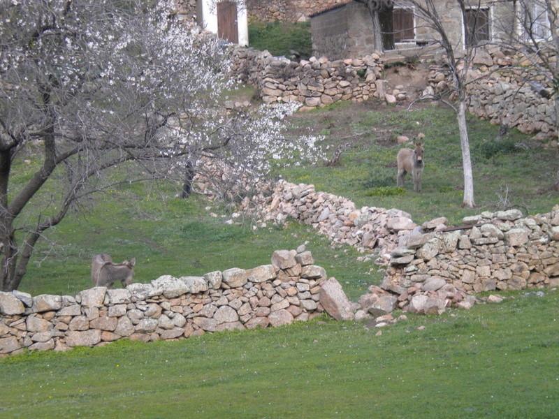 les ânes du village - Page 2 Dscn4022