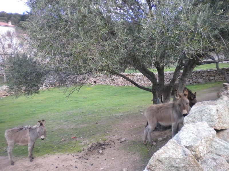 les ânes du village - Page 2 Dscn4024