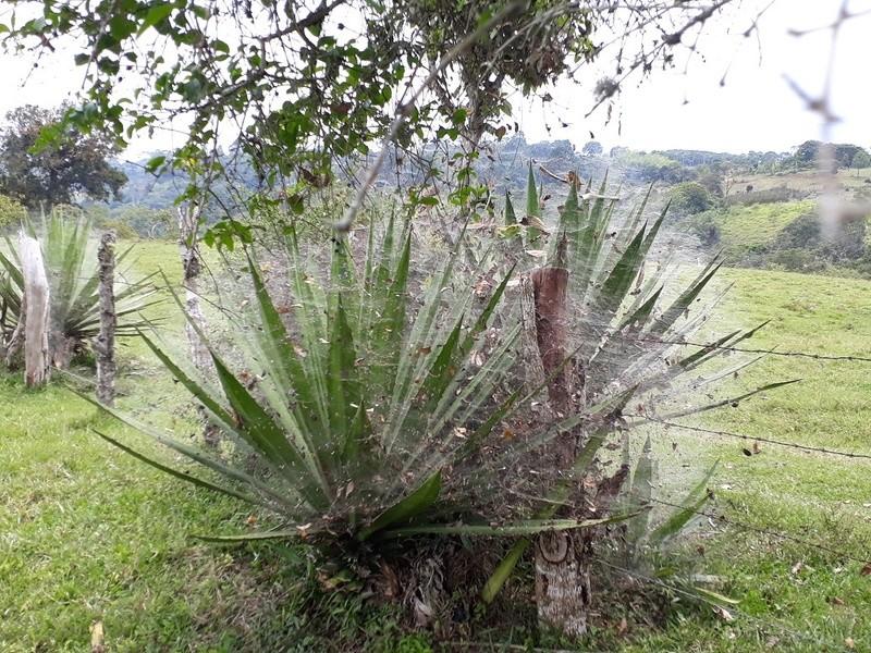 Le 10.02.2018 San Augustin (site classé au patrimoine mondial par l'UNESCO). 20180259