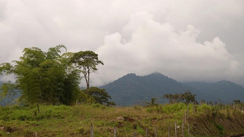 Le 28.12.2017 L'Amazonie. Dscf3212