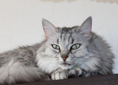 Моя ангорская кошачесть - Страница 22 Img_3515