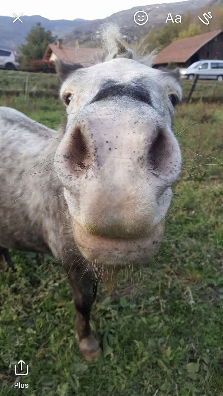 DAISY - ONC Poney née en 2001 - adoptée en juillet 2017 par Caroline 2cb11410