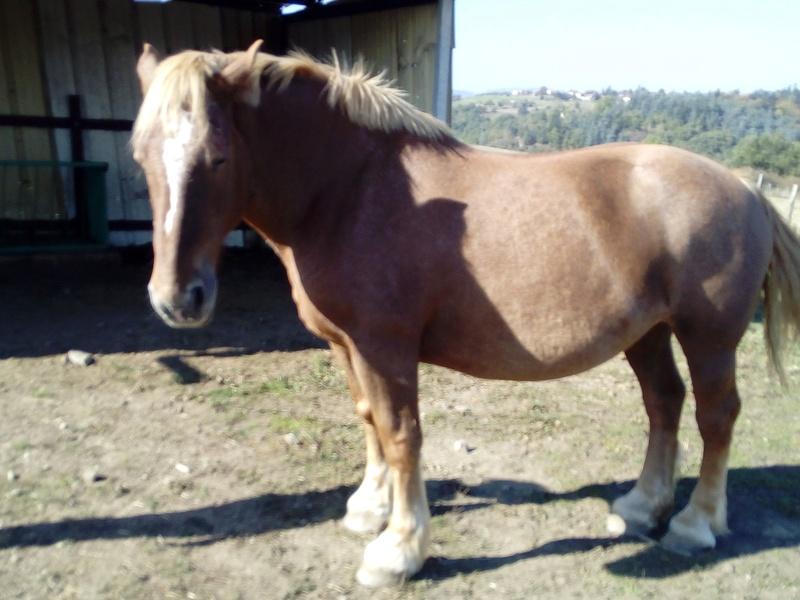 TANIA - Cheval de Trait  née en 2007- adoptée en mai 2011 par Claire - Page 2 Img_2024