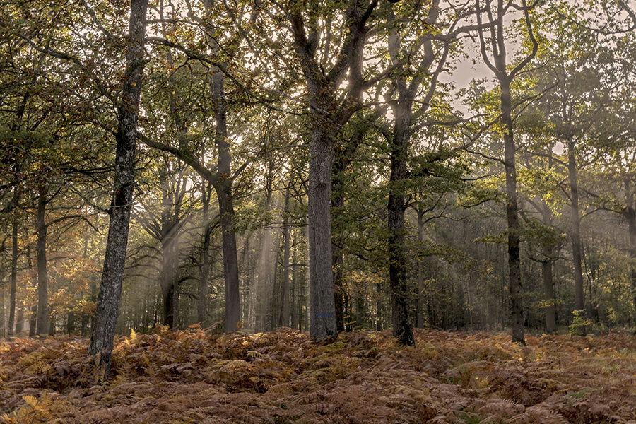 La forêt enchantée _dsc2112