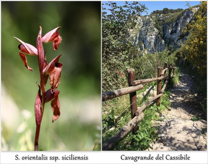 Escapades siciliennes (20-27 avril)  - Page 2 J5d10