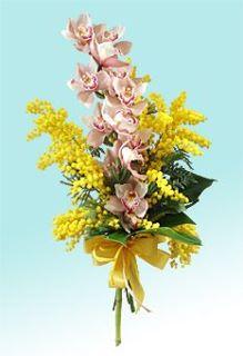 8 marzo - festa della donna Mimosa10