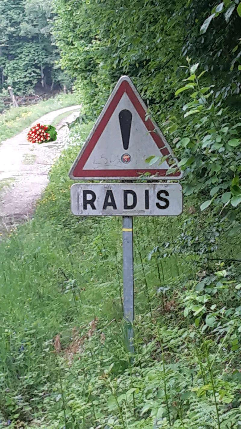 Les panneaux drôles, bizarres, étranges - Page 4 Radis12