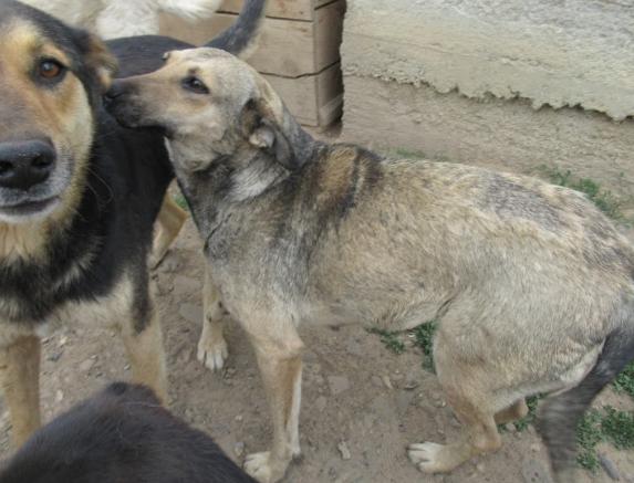 AURA - femelle de taille moyenne, née en 2012 (PASCANI) - REMEMBER ME LAND Aura510
