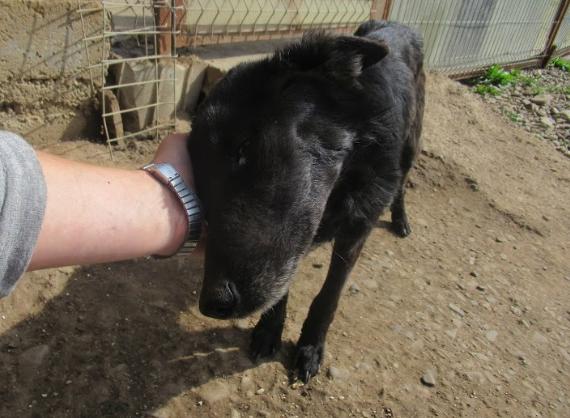 BAKA - femelle croisée, de taille petite à moyenne, née environ en juin 2015 (PASCANI) - REMEMBER ME LAND - En famille d'accueil chez Laurence (Belgique) Baka210