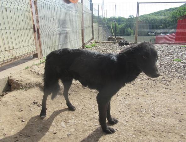 BAKA - femelle croisée, de taille petite à moyenne, née environ en juin 2015 (PASCANI) - REMEMBER ME LAND - En famille d'accueil chez Laurence (Belgique) Baka410