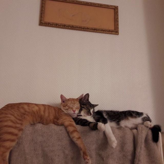 VENUS (ex TITI) - chaton femelle, née avril 2016 - En FA chez Abysse (92) - ADOPTEE PAR ANNE et FATLUM (depart94) - Page 2 Duches15