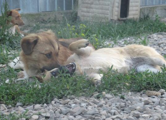 NIKON - mâle croisé de moyenne, né juillet 2017. Frère de Nika (PASCANI) - REMEMBER ME LAND Jojoba30