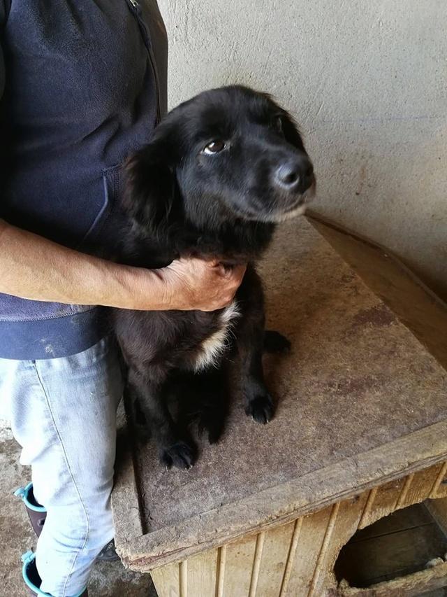 LORELEI - femelle, croisée de taille moyenne, née environ en 2013 - CHEZ ALINA & ANDA - Adoptée par Robbe (Belgique) Lorele10