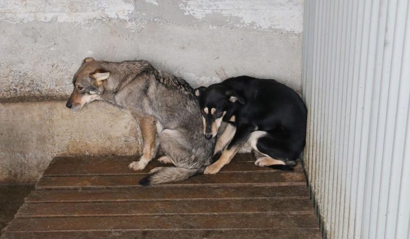 LUPI !! + de 3 ans de box !! - femelle , née environ en 2010, typée chien loup de sarloos, taille moyenne - REMEMBER ME LAND - Page 2 Lupi10