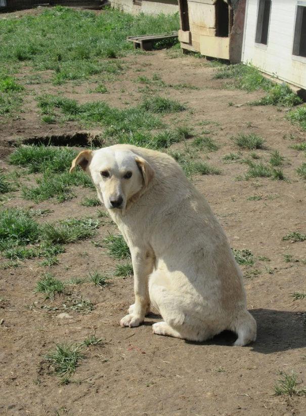 MELCHIOR - mâle croisé de taille moyenne, né en 2014 (PASCANI) - REMEMBER ME LAND Melchi19