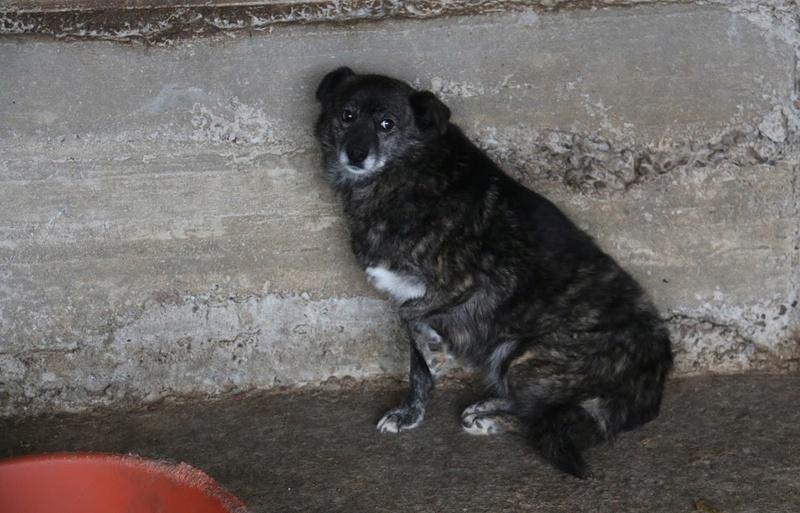 MIGNONNE - femelle, croisée, née environ août 2012, de petite taille - REMEMBER ME LAND - En FA chez Armelle (94) Mignon13