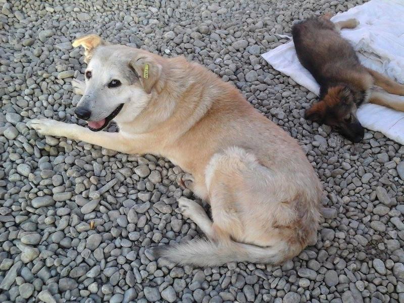 TATAIE - mâle, de taille moyenne, né environ 2005 - Refuge Anda et Alina - Adopté par Brigitte (87) décédé Tataie15