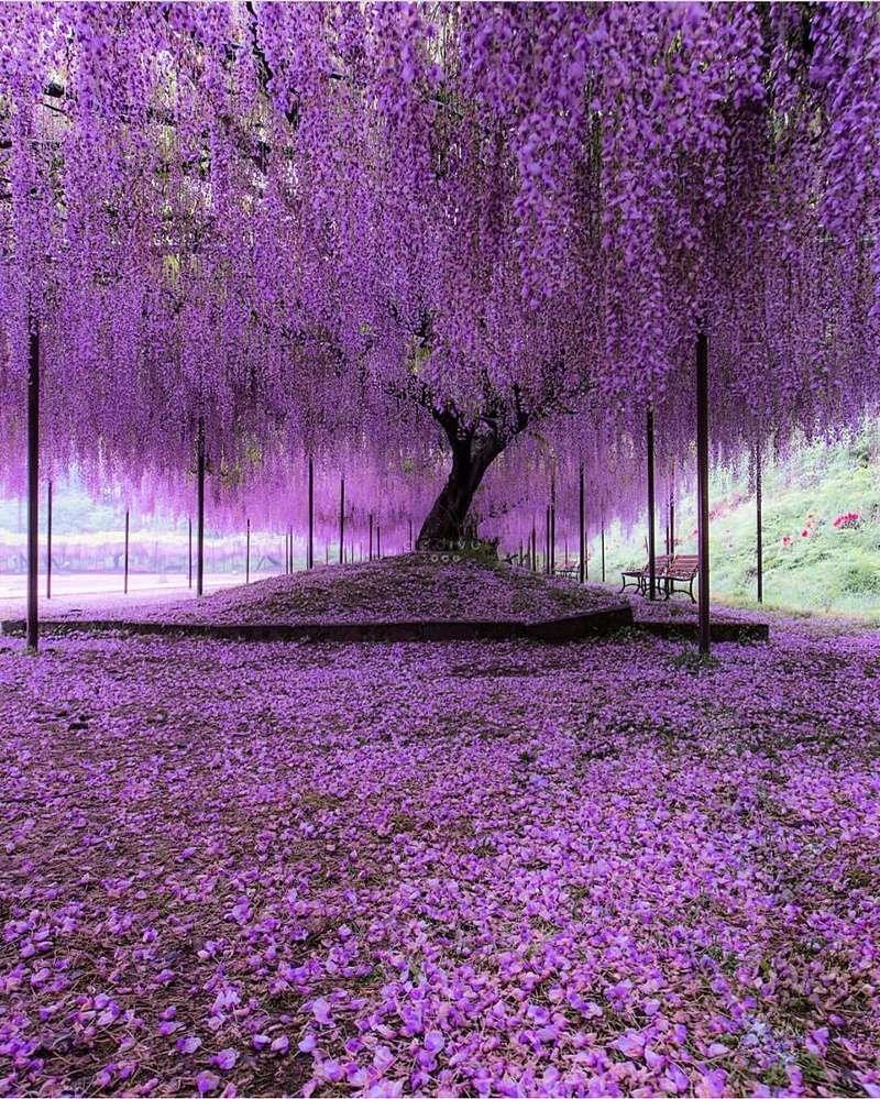 Gallerie di primavera... - Pagina 2 Japan-10