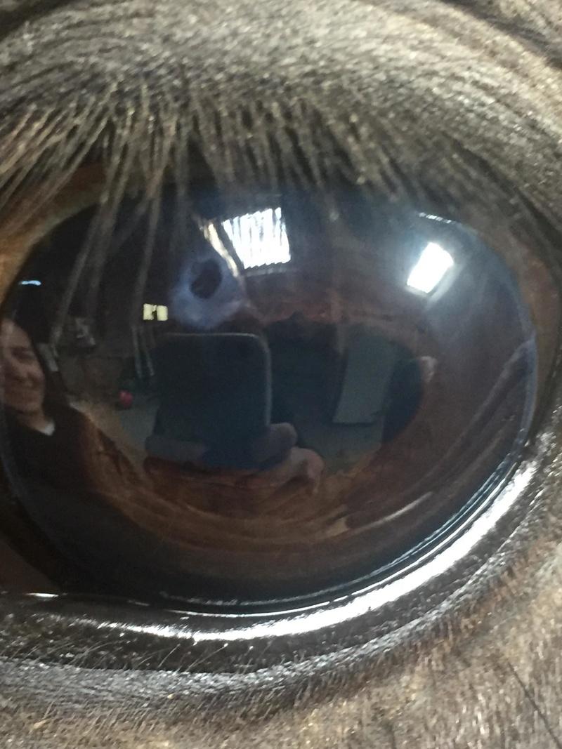 Petite tache dans l'oeil 30125811