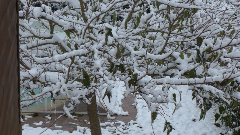 et la neige étend son manteau blanc... P1020011